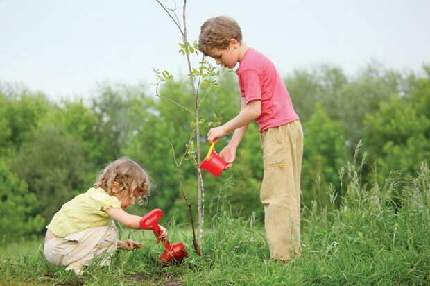 Как правильно высаживать молодые плодовые растения