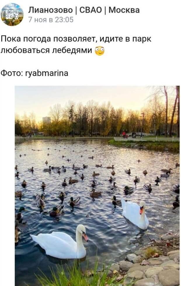 Фотокадр: Ромео и Джульетта в Лианозовском парке ещё не переехали в зимний дом