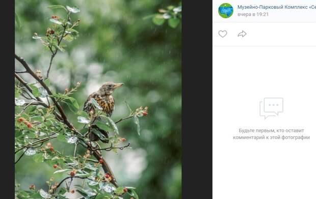 Фото дня: дрозд-рябинник в парке «Северное Тушино»