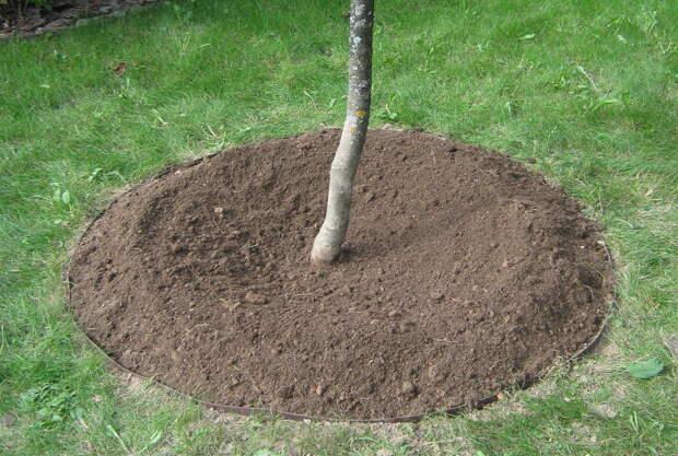 Приствольные круги у деревьев в саду – мульчировать или лучше перекапывать