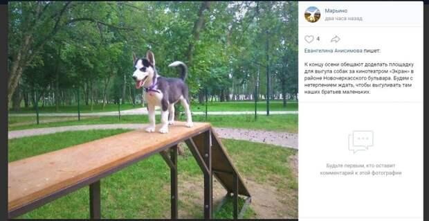 В ожидании новой площадки для собак