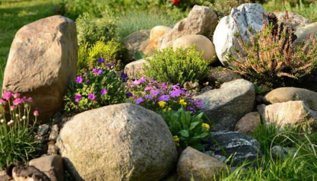 Тринадцать скальных растений, цветущих с весны и до осени