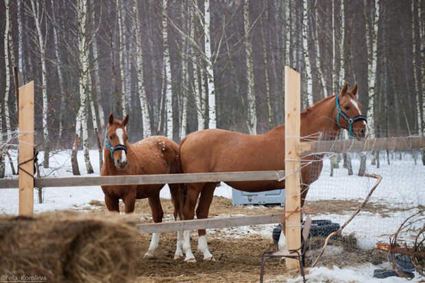 Петербуржцы могут сдать новогодние елки на корм для животных