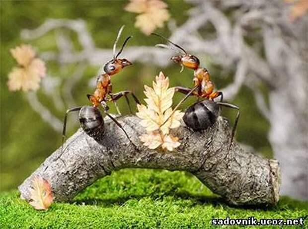 От муравьёв на участке и в доме