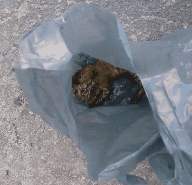 Развязав пакет для мусора, женщина обнаружила промокшую кроху и не смогла сдержать слез