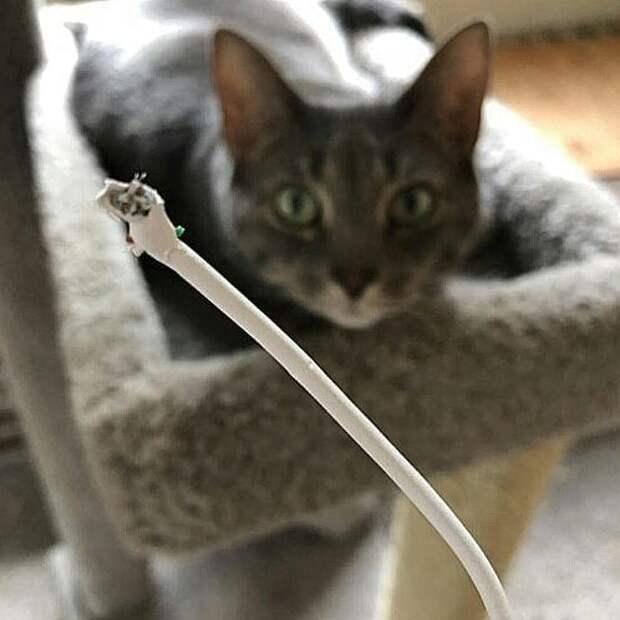 кот нашкодил