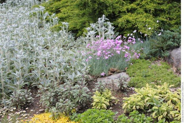 Пестролистные травы, овощи, злаки для креативных дач