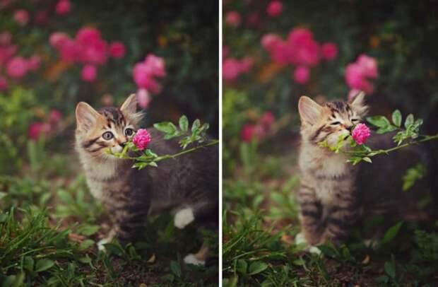 Какие растения любят кошки