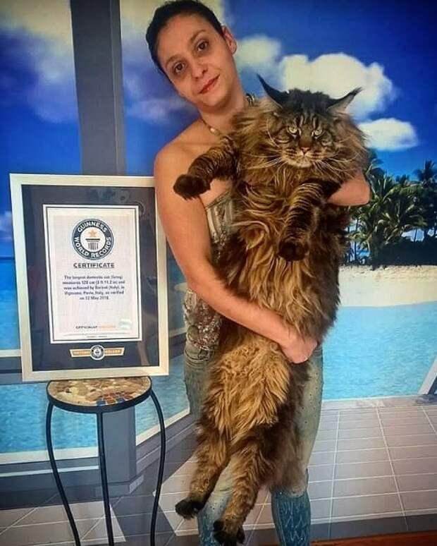 Кот из Италии попал в Книгу рекордов Гиннесса
