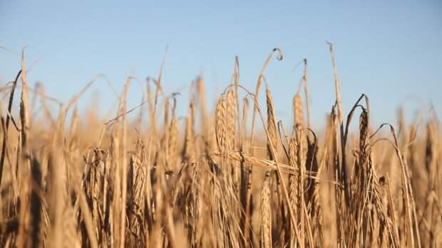 Рост урожайных цен может повлиять на подорожание продуктов в мире
