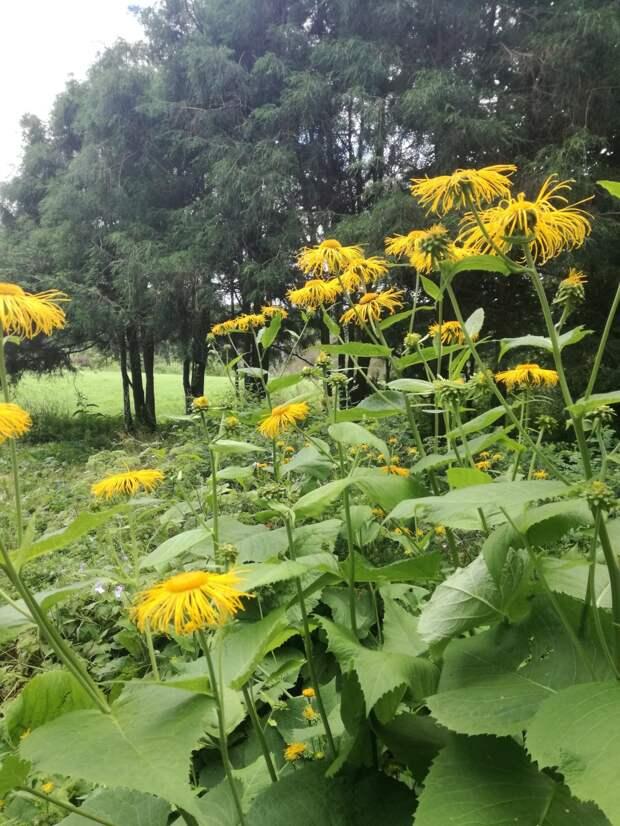 Поход в Ботанический сад