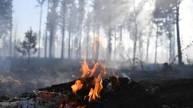 В ХМАО тушат лесные пожары на площади 53,5 га