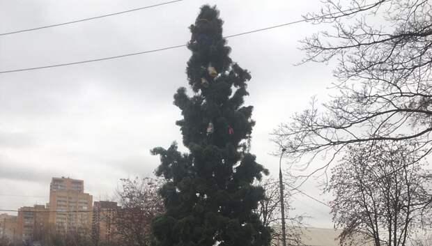 Сотрудники УК Подольска установили новогодние ели у Дворца молодежи