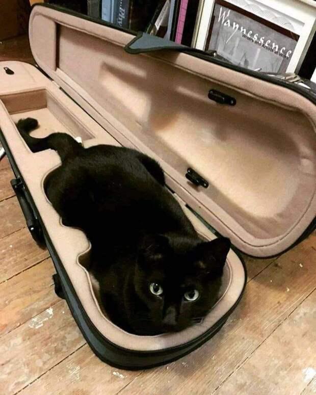 Возможно, это изображение (кот и в помещении)