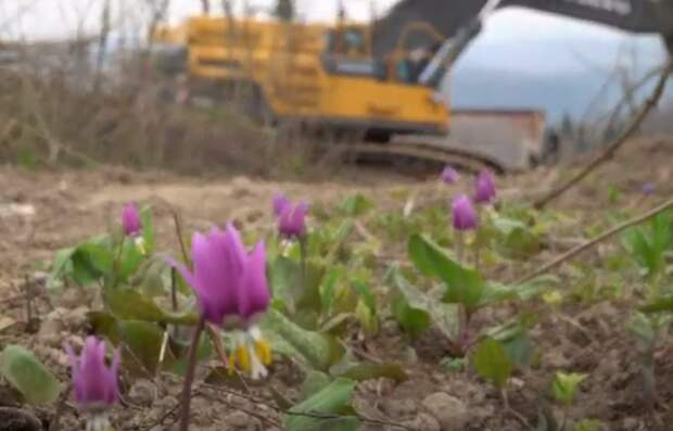 Угледобытчиков из Сибири обвинили в уничтожении краснокнижных растений