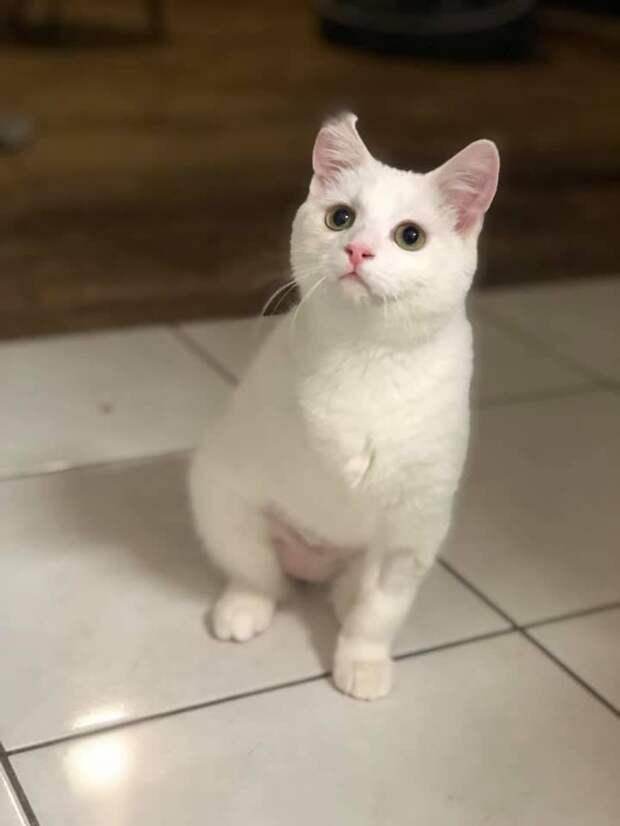 Хромая кошка слонялась по обочине дороги, бегая от людей история спасения, кошка, кошки, помощь животным, спасение животных