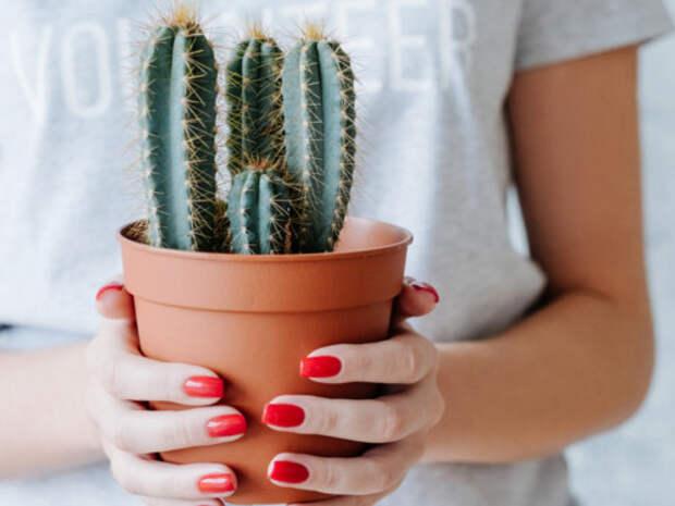 Эти растения лучше убрать из дома, чтобы избавиться от бед, неудачи и безденежья
