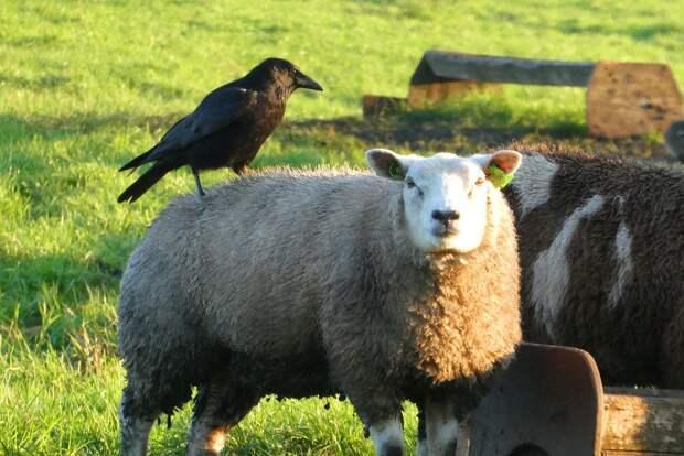 Линькой животных в зоопарке Удмуртии воспользовались птицы