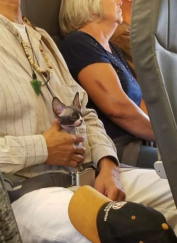 30. А вот и котик борт, животные, пассажир, перелет, полет, самолет, фото