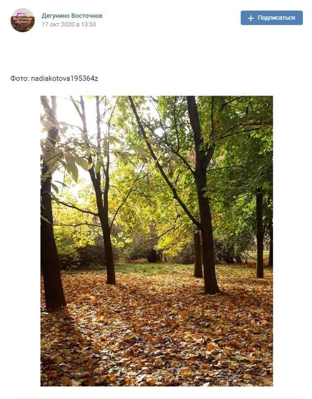 Фото дня: парк «Северные Дубки» возвращает в детство