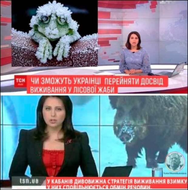 """Виктор """"Соколиный глаз"""" Медведчук и правовой нигилизм"""