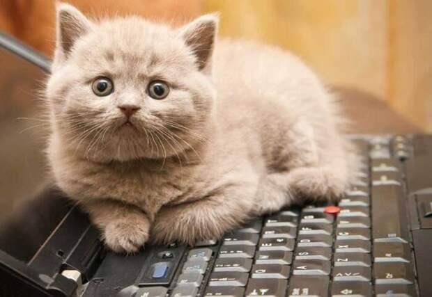 По этой же причине коты любят работающую технику. /Фото: kot-pes.com.