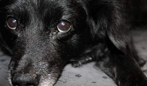 Житель Петербурга задержан заизбиение собаки другой собакой
