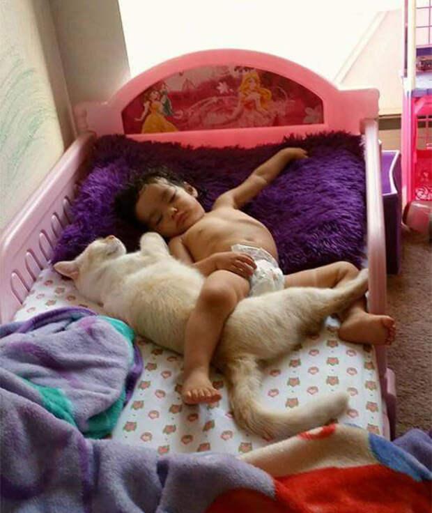 Даже родителям не удается так поладить с животными  девочка, дружба, кот