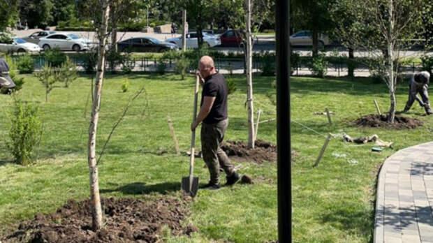 Власти Ростова пообещали заменить все засохшие деревья новыми