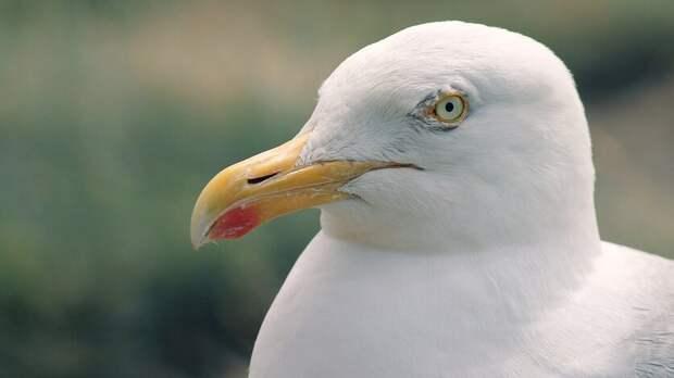 Сотню мертвых птиц нашли наЧерноморском побережье жители Краснодарского края