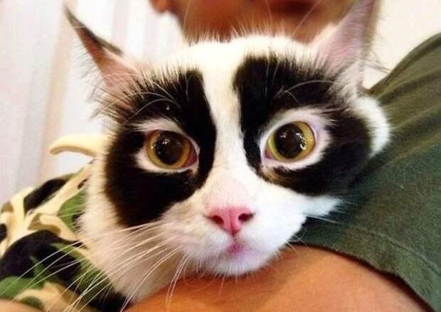 Секретный агент животные, забавно, коты, кошки, неожиданно, окрас, окрас кошек, фото
