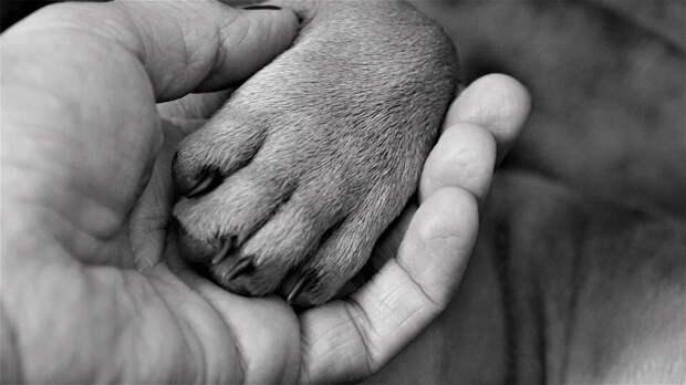 Приютский пёс сам взял за руку свою новую хозяйку и повёл её домой