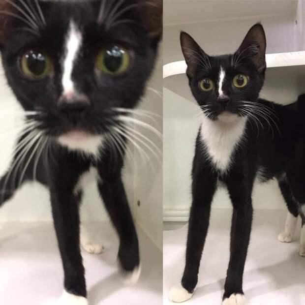 В Интернете прославилась кошка с очень длинными лапами