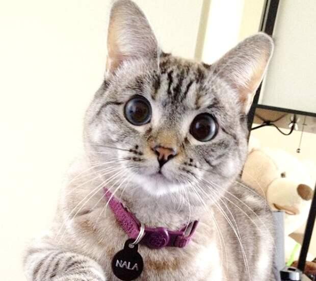 Очаровательные косоглазенькие коты: милота в чистом виде!