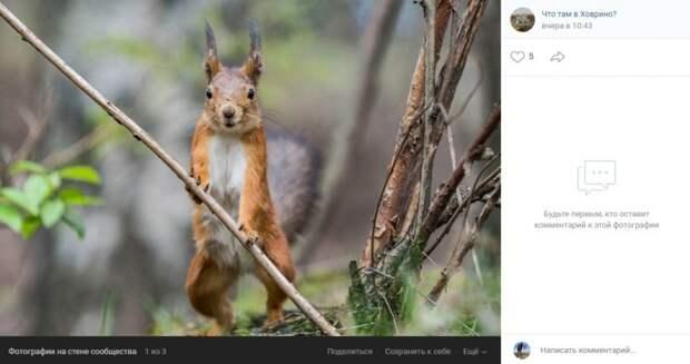 Фото дня: в Химкинском лесопарке рыжему грызуну устроили фотосессию