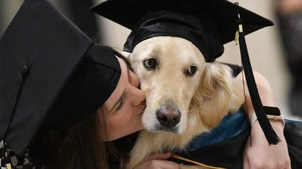 В США стресс студентов лечат собаки-терапевты