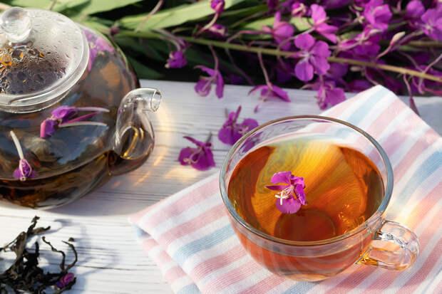 Иван-чай: польза и вред, советы врача