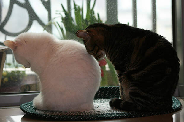 Ритуал кошачей любви. Фото
