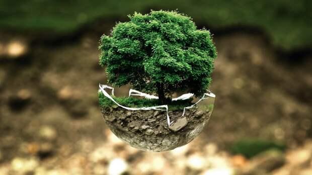 Экология. Фото: pixabay.com