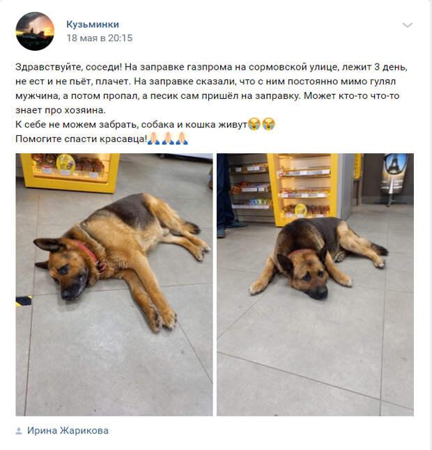 Потерявшей хозяина овчарке из Выхина-Жулебина нашли пристанище