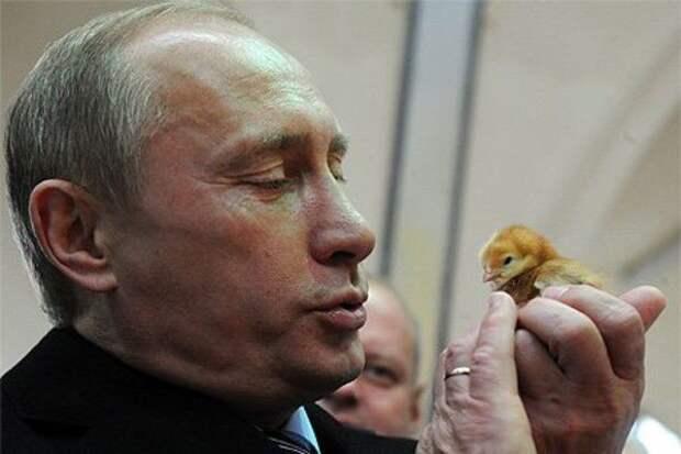 Путин и цыпленок