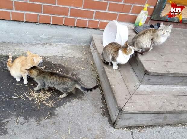 Пушистик, Рыжик, Варя и Камышка верно ждут хозяев у дома вот уже два месяца Фото: Анна Фролова