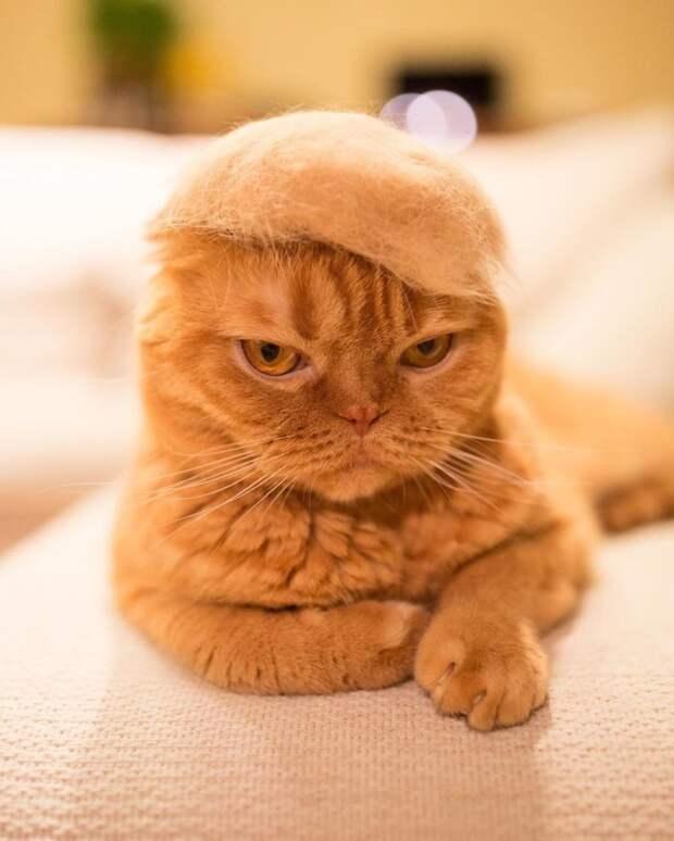 Уморительные кошки в валяных шапках кошки, смешные