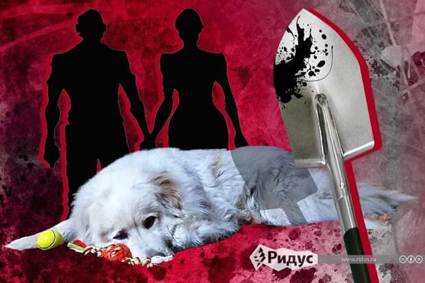 «Забьем тебя лопатой»: блогера затравили зато, что онубил пса изприюта