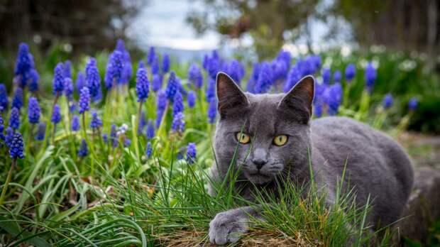 Вывести соседских кошек из сада: лучшие (дружественные к животным) способы.