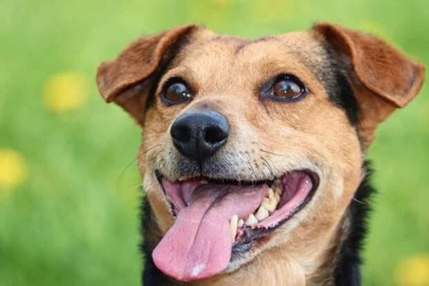 Умеют ли собаки улыбаться?