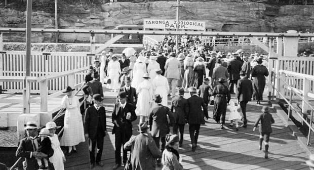 Австралийцы и их домашние животные в начале ХХ века австралия, животные, животный мир Австралии, забавно, история, необычно, слон за чаем, старые фотографии