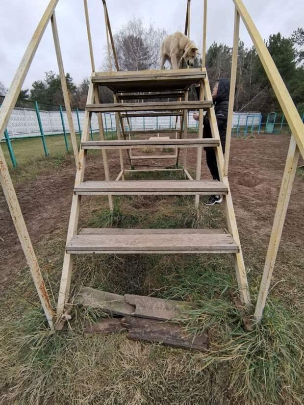 Вышку на собачьей площадке у Жулебинского лесопарка отремонтировали — Жилищник