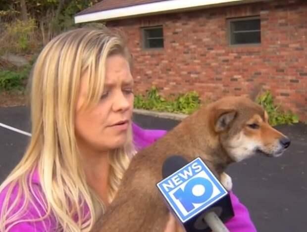 Сбив собаку, женщина-водитель не могла сообразить, куда та пропала. А ведь питомица была прямо у нее под носом