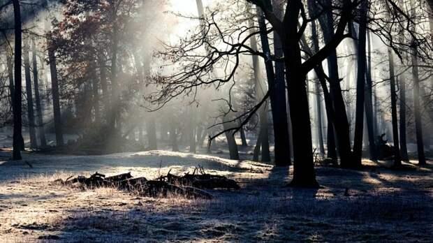 Расчлененный труп около четырех месяцев пролежал в лесу Кемеровской области